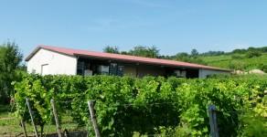 Weingut Kühn in 55276 Dienheim